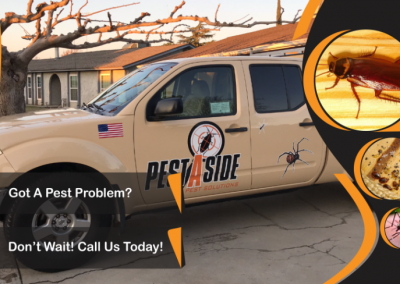 Pest Control Website Banner