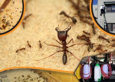 Pest Control Website Banner
